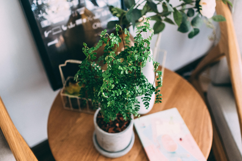 Piante Da Arredo Appartamento le piante da appartamento che fanno bene e arredano con
